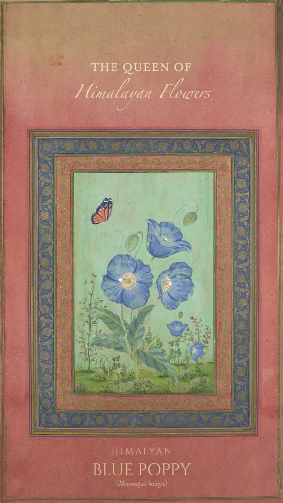Blue-Poppies--Card1
