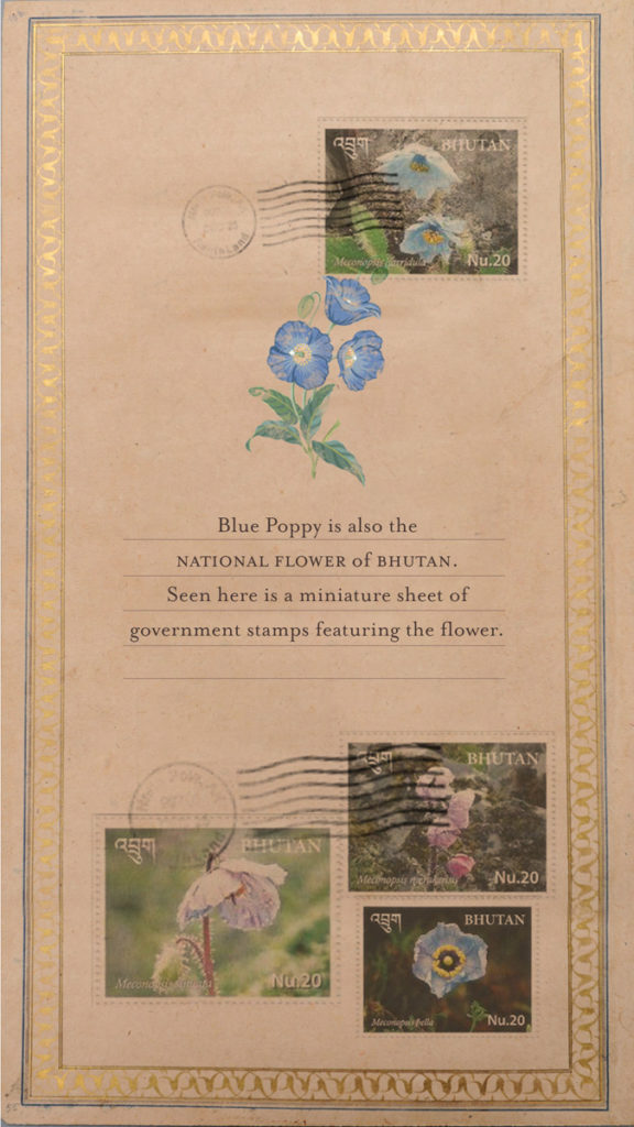 Blue-Poppies--Card4
